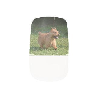 Glen of Imaal Terrier Nails Sticker