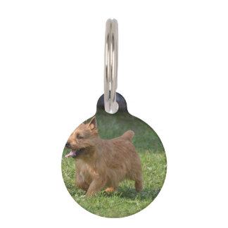 Glen of Imaal Terrier Pet Tags