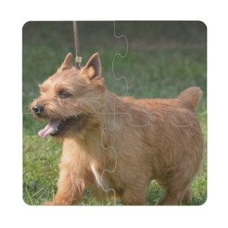 Glen of Imaal Terrier Puzzle Coaster