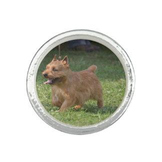Glen of Imaal Terrier Rings