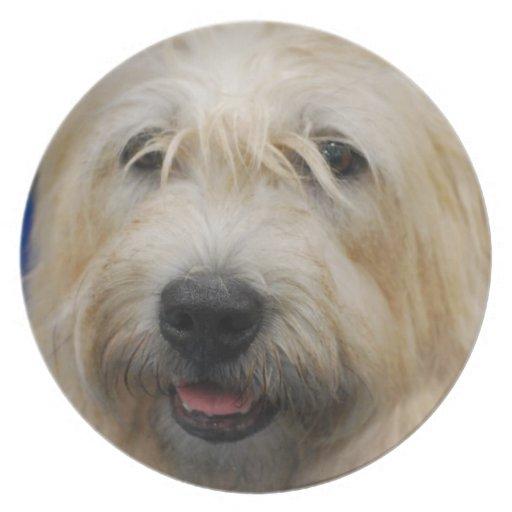 Glen of Imaal Terrier Plate