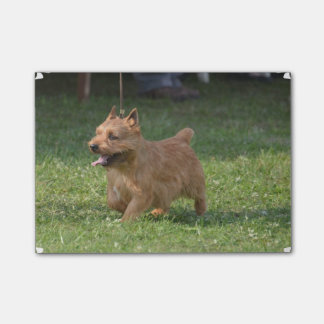 Glen of Imaal Terrier Sticky Notes