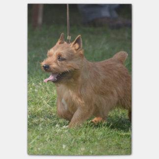 Glen of Imaal Terrier Post-it® Notes
