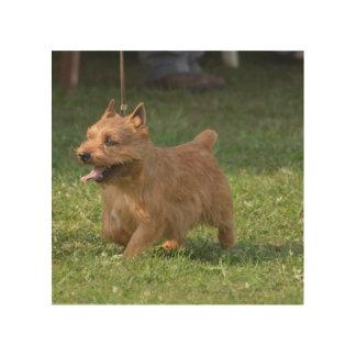 Glen of Imaal Terrier Wood Canvases