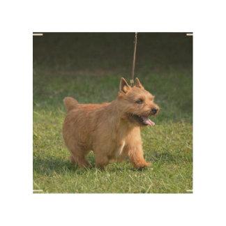 Glen of Imaal Terrier Wood Canvas