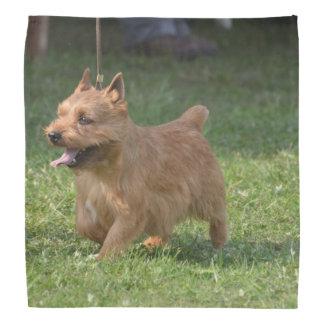 Glen of Imaal Terrier Head Kerchiefs