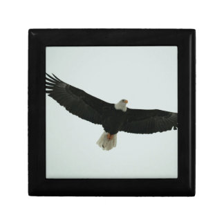 Gliding bald eagle gift box
