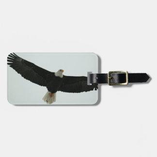 Gliding bald eagle luggage tag