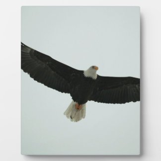 Gliding bald eagle plaque