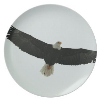 Gliding bald eagle plate
