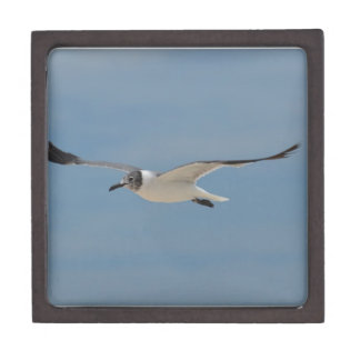 Gliding Laughing Gull Premium Jewelry Box