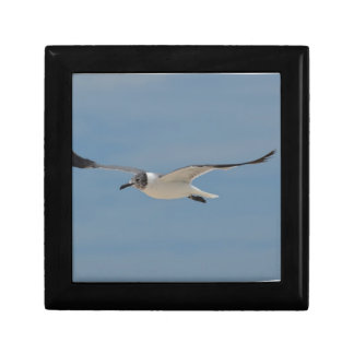 Gliding Laughing Gull Small Square Gift Box