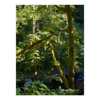 Glimpse Upstream Poster
