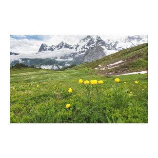 Globe Flowers, Almendhube, Switzerland - Canvas Gallery Wrap Canvas