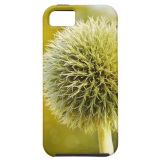 globe-thistle-599653 iPhone 5 cover