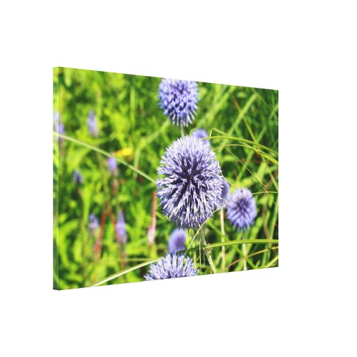 globe thistle stretched canvas prints