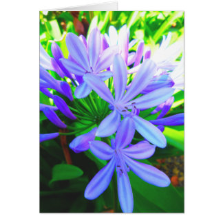 Glorious Agapanthus - Gift Card