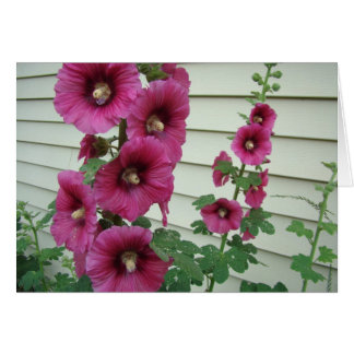 Glorious Hollyhocks Card