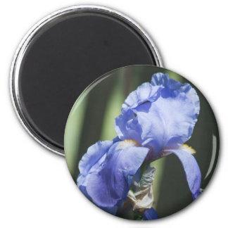 Glorious Iris Flower Gift Magnet