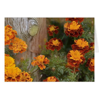 Glorious Marigolds Card