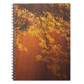 Glorious Morning Sun Rise Through Trees Spiral Note Book