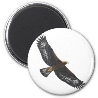 Glorius Golden Eagle Soaring Fridge Magnets