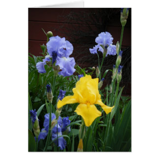 """Glorius Irises"" Card"