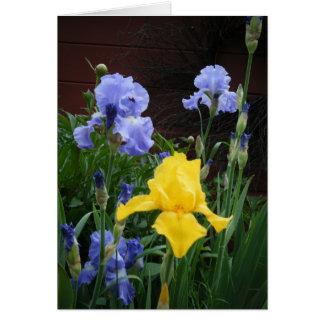 """""""Glorius Irises"""" Note Card"""