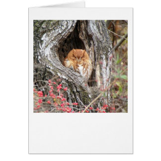 Glory the Screech Owl Card