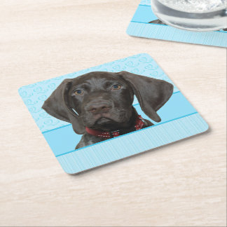 Glossy Grizzly in Blue Kitchen & Dining Square Paper Coaster