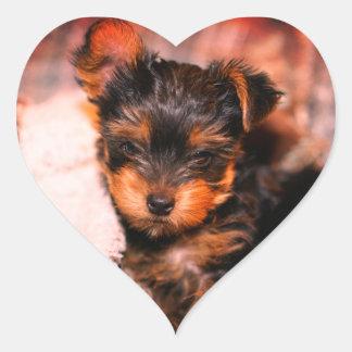 Glossy Yorke Pup Small Heart Sticker