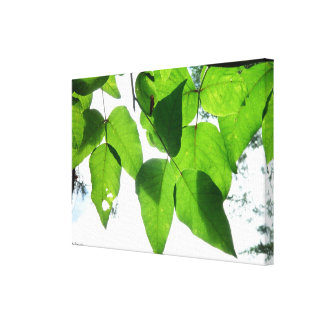 Glowing birch leaves Stretched Canvas Print