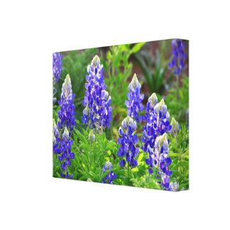 Glowing Bluebonnets Canvas Print