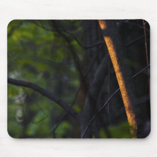glowing-branch-2012-03-30 mouse pad