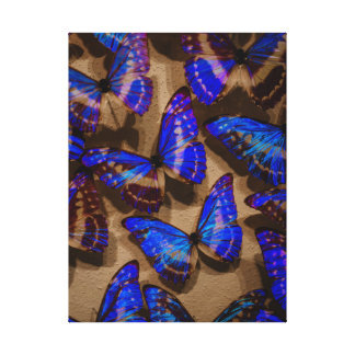 Glowing Butterfly Specimens Gallery Wrap Canvas