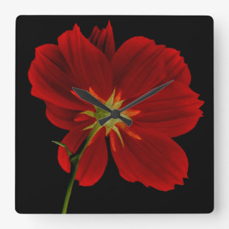 Glowing in Darkness/Red Gerbera Photography Square Wall Clock