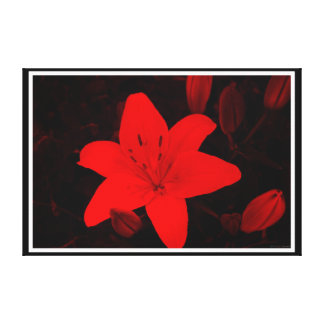 Glowing Lily Gallery Wrapped Canvas