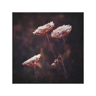 Glowing Queen Anne's Lace Wild Flowering Plant Canvas Print