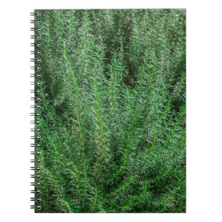 Glowing Rosemary Bushes Spiral Notebook