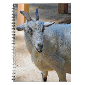 Goat 540 notebook