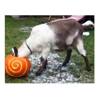 Goat and Pumpkin Postcard
