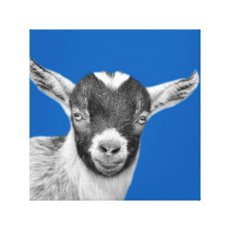 Goat animal farm nursery kids room black and white canvas print