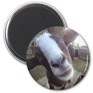 Goat Barnyard Farm Animal Magnet