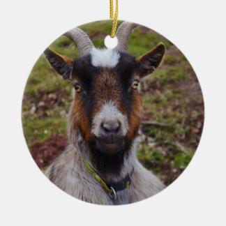 Goat close up. round ceramic decoration