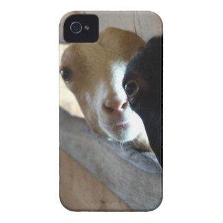 Goat Focus Case-Mate iPhone 4 Case