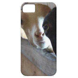 Goat Focus iPhone 5 Cover