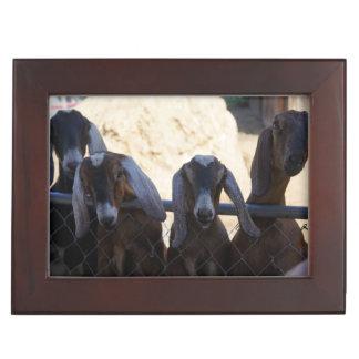 Goat Gathering Memory Box