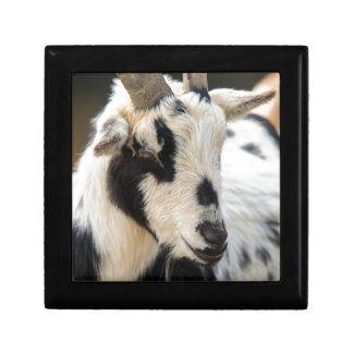 Goat portrait gift box