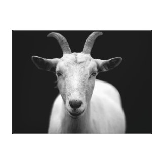 Goat portrait in black and white stretched canvas prints