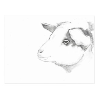 Goat profile postcard by Nicole Janes
